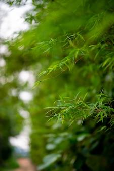 Bosque de árboles de bambú verde