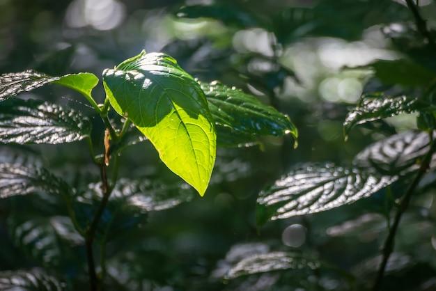 Bosque y árboles verdes en tailandia