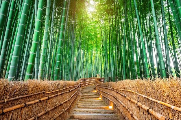 Bosque de bambú en kyoto, japón.