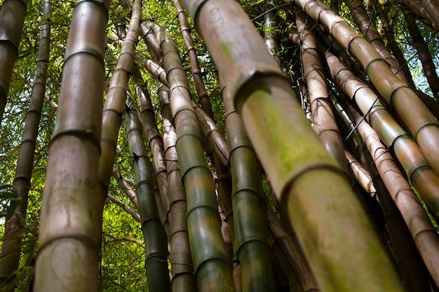 Bosque de bambú oriental a la luz del día