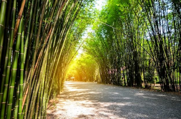 Bosque de bambú en tailandia