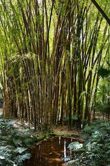 Bosque de bambú verde tropical