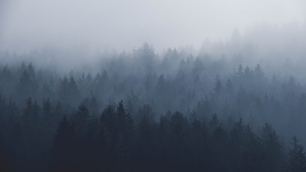 Bosque brumoso en las montañas