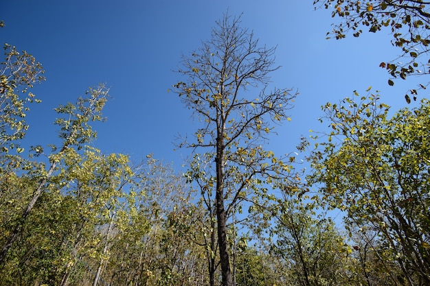 Bosque caducifolio