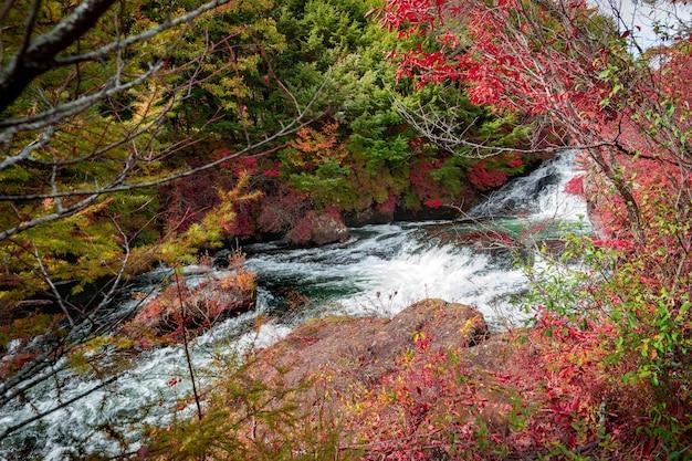 Bosque colorido con cascada en la temporada de otoño