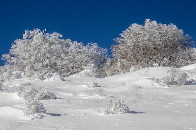 Bosque cubierto de nieve en invierno durante el día.