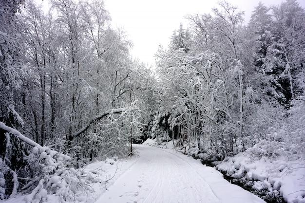 Bosque de cuento de hadas nevado en alemania.