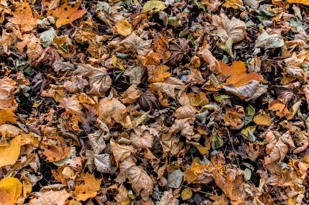 Bosque deja textura fondo telón de fondo otoño