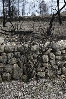 Bosque después del incendio desastre quemó árboles españa