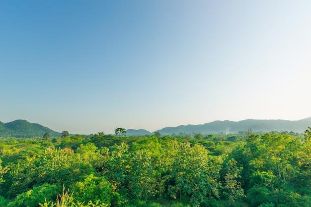 Bosque en día soleado, paisaje primaveral, naturaleza de bosque lluvioso y montaña.