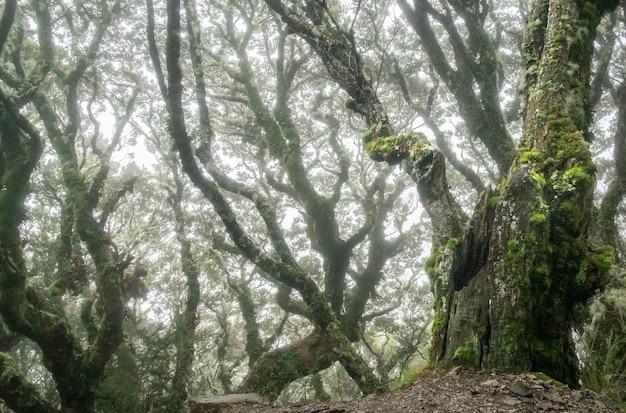 Bosque espeluznante con árboles retorcidos disparados durante condiciones de niebla kepler track nueva zelanda