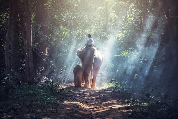 En el bosque; estudiante chico asiático con elefante, campo en tailandia