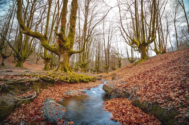 Bosque de fantasía otzarreta en otoño en el país vasco