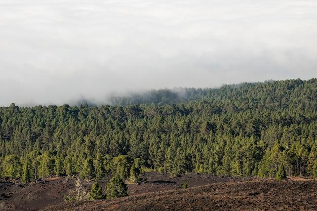 Bosque de hoja perenne con nubes