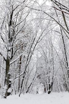 Bosque de invierno con árboles sin follaje.