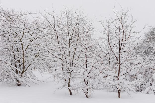 Bosque de invierno con árboles nevados.