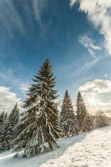 Bosque de invierno de hadas con abetos cubiertos de nieve y un hermoso cielo azul