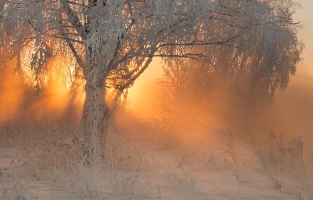 Bosque de invierno con increíbles rayos de sol en la niebla
