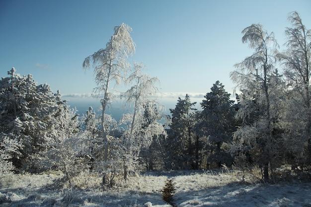 Bosque de invierno en las montañas de crimea