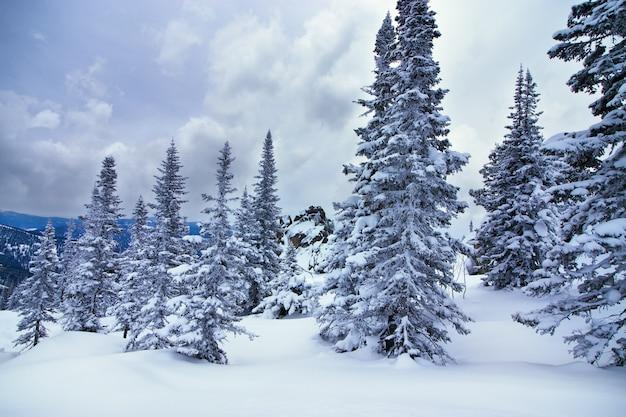 Bosque de invierno en siberia