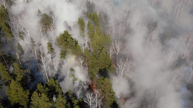 Bosque en la ladera, enorme incendio forestal con espeso humo negro