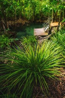 Bosque de manglares con arbustos y un lago