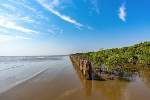 Bosque de manglares, samut prakan, tailandia