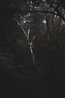 Bosque misterioso oscuro lleno de diferentes tipos de plantas.