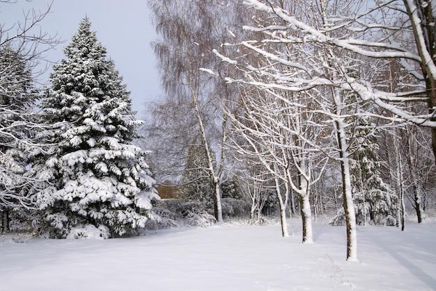 Bosque mixto en la nieve del invierno