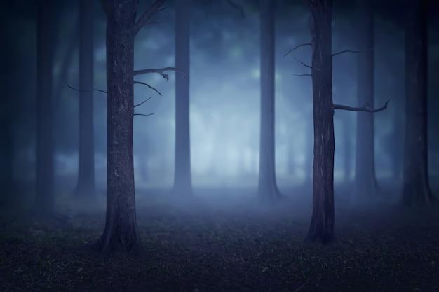 Bosque con muchos árboles y niebla.
