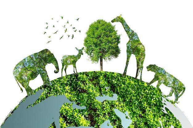Un bosque muy rico con frondosos árboles. concepto ambiental masivo