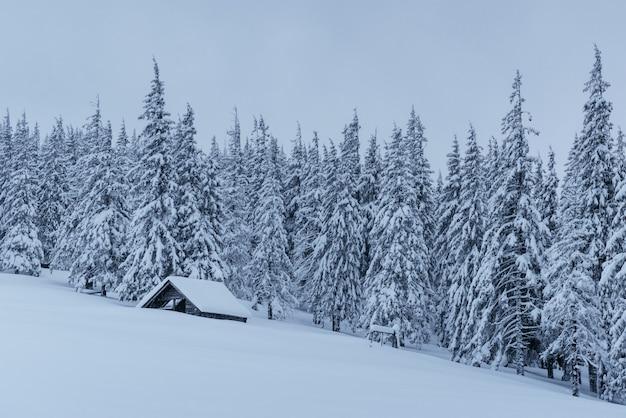 Bosque nevado en los cárpatos. una pequeña y acogedora casa de madera cubierta de nieve. el concepto de paz y recreación de invierno en las montañas. feliz año nuevo