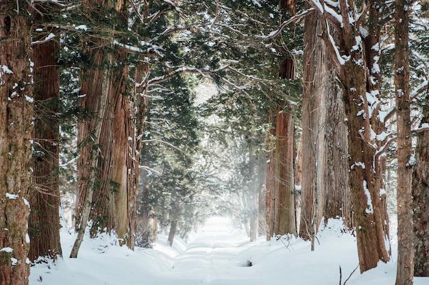 Bosque nevado en el santuario de togakushi, japón