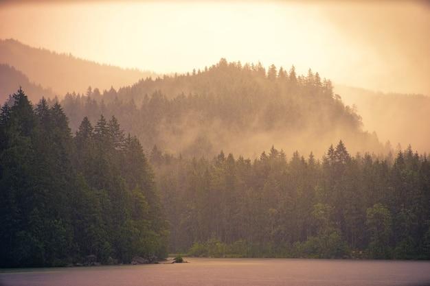 Bosque y niebla matutina