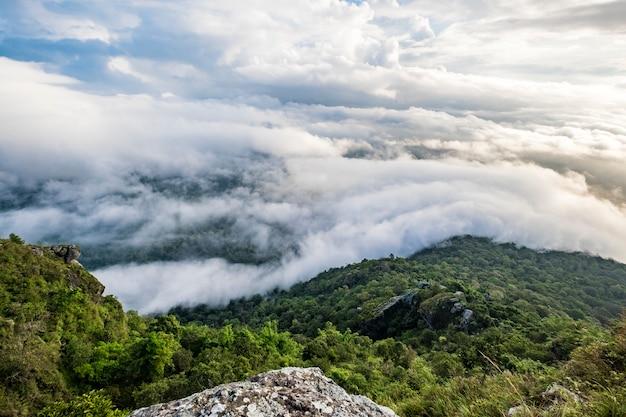 Bosque nube y cielo en amanecer