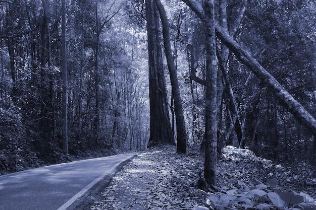 Bosque oscuro en la noche, tailandia