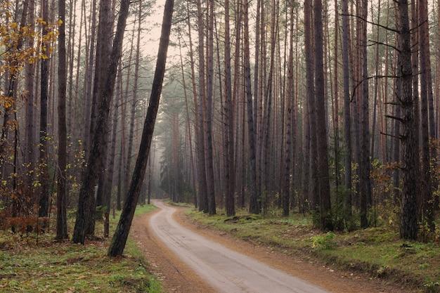 Bosque otoñal místico con niebla