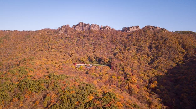 Bosque de otoño en corea