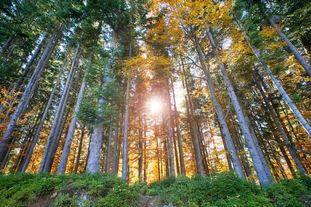 Bosque de otoño en un día soleado