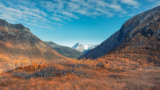 Bosque de otoño de pequeños abedules enanos con hojas amarillas sobre un fondo de montañas en las islas lofoten en noruega en un día soleado