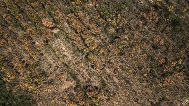 Bosque de otoño en vista aérea