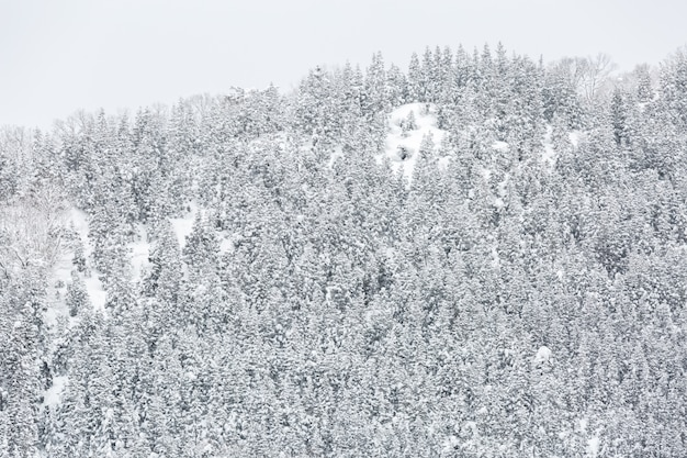 Bosque de paisaje de invierno