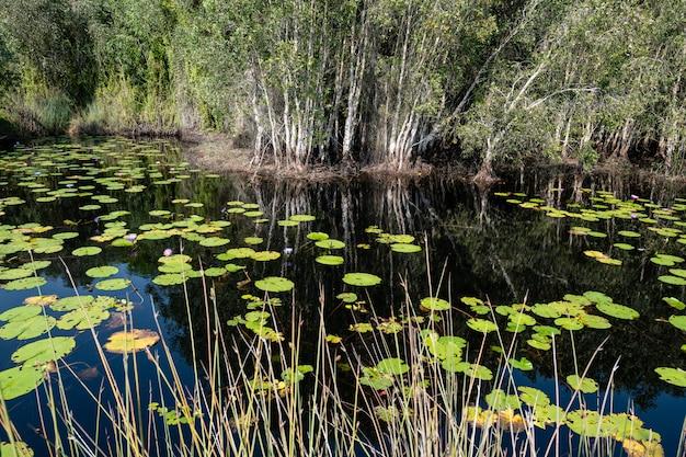 Bosque de pantano de turba, jardín botánico de rayong, tailandia