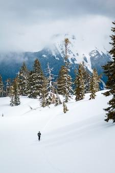 Bosque de pinos cubierto de nieve con montañas cubiertas de niebla y bosques en el fondo