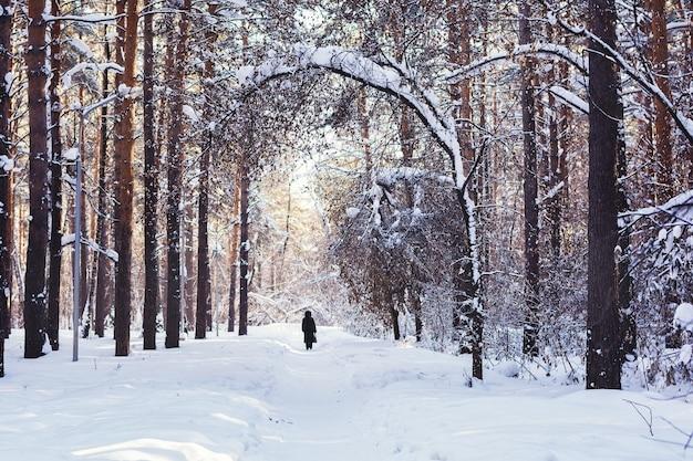 Bosque de pinos en invierno
