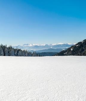 Bosque de pinos en montañas nevadas de invierno