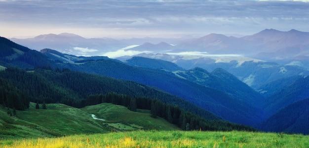 Bosque de pinos. mundo de la belleza. montes de cárpatos. ucrania, europa