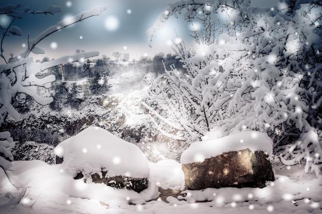 Bosque de plantas de árboles cubiertos de nieve en invierno