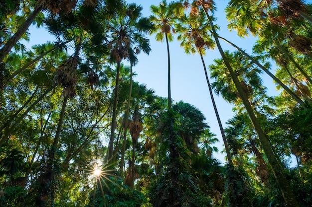 Bosque primitivo, distrito de bandung, provincia de udon thani, tailandia