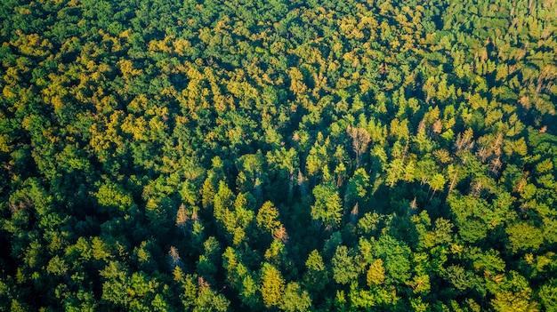 Bosque con punto de vista de drones.